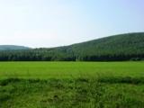 поле,_русское,_зе