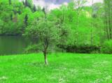 луг,_река,_пейзаж