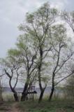природа,_весна,_л