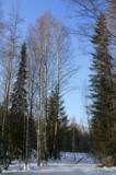 Коми,_Север,_весн