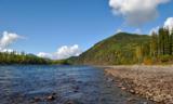 река,_лес,_тайга,_