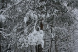 деревья,_зима,_мо