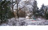 Зима,_Кубань,_2006,_
