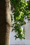 дерево,_лес,_парк