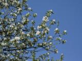весна,_май,_цвете