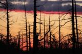 лес_деревья_пожа