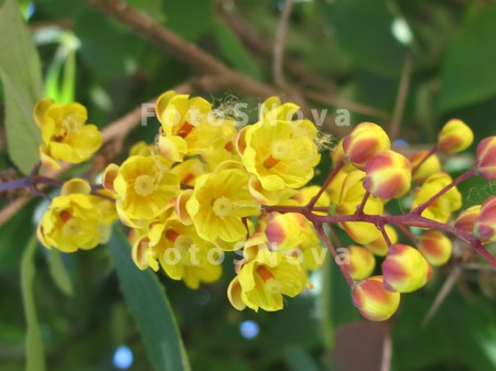 Цветы выращиваемые на балконе