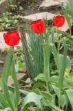 Цветы,_трава,_тюл