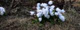 цветы_ве�