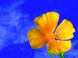 один,_цве
