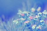 весна,_лесные,_лу