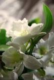 орхидея_дендроб�