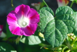 цветок,_цветы,_са