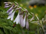 растение,_цветы,_