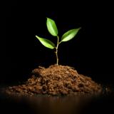 green_braird_leaf_plant_agricu