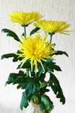 цветок_цветы_бук