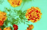 цветок,_цветы,_ба
