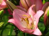 цветы,_са