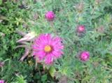 флора,_цветок,_сл