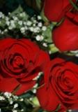 Цветы,_букет,_пра