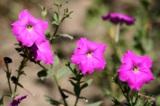 Лето,_дача,_цветы