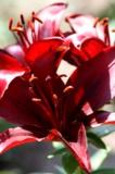 цветы_лето,_цвет�