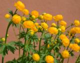 растение,_купаль