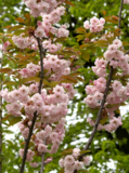 _весна,_ветка,_�