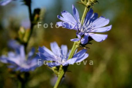 Поле,_лето,_цветы
