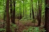 лес,_парк,_дождь,_
