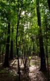 лес,_деревья,_рас