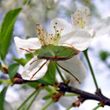 фон_природа_весн