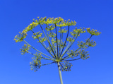 растение_цветок_