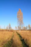 пейзаж_природа_б