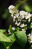весна;_природа;_д