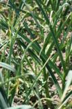 огород,_урожай,_ч