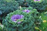 осень_растения_д