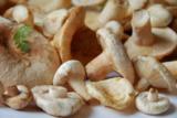 грибы,_растения,_