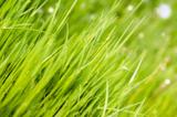 трава,_раститель