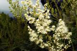 природа,_флора,_п