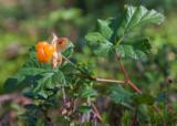 природа,_растени