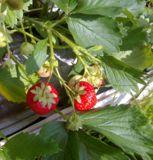 садовая_земляни�