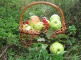спелые_яблоки,_к�