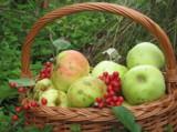 яблоки,_сад,_корз