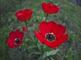 весна,_май,_трава