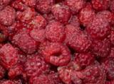 малина,_ягода,_яг