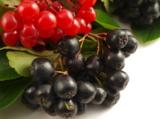 гроздь,_ветка,_ря