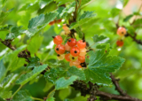 Растение;_кустар