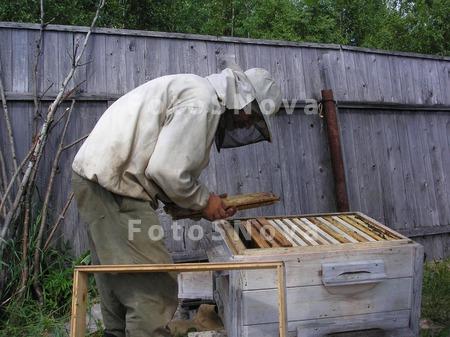пасека,_пчеловод