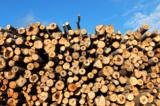 древесина,_ствол